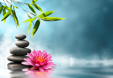 spas: Seerose mit Steinen und Bambus