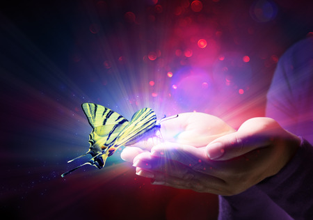 butterfly in hands - fairytale and trust Standard-Bild
