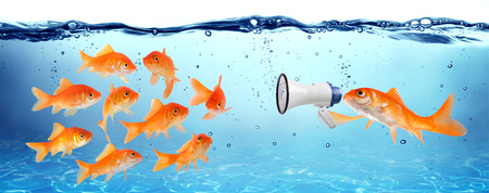 goldfish: announcement, conference or political campaign Stock Photo
