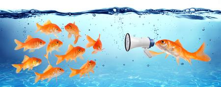 peces de colores: anuncio, conferencia o campaña política