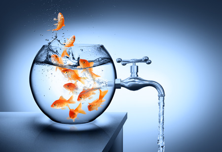 dead fish: wasted water - waterless risk concept Stock Photo