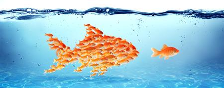 pez dorado: La formaci�n y la educaci�n Foto de archivo