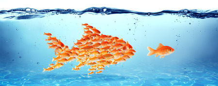 goldfish: Training and education Stock Photo