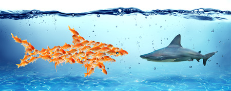 goldfish: Unity is strength - teamwork concept