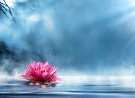 평화로운 풍경 영 선