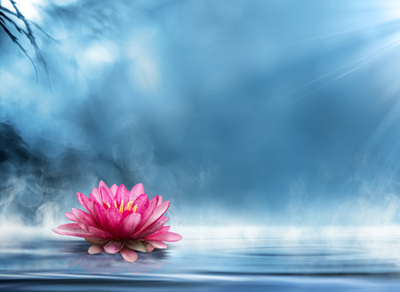 purple lotus: spirituality zen in peaceful scenery