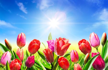 campo de flores: florece en primavera