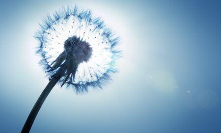 allergies: dandelion - spring and allergy