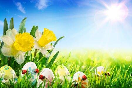 colourful sky: easter eggs with ladybugs on meadow