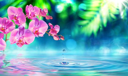 reflexion: orquídea en el jardín zen con la gotita en la charca