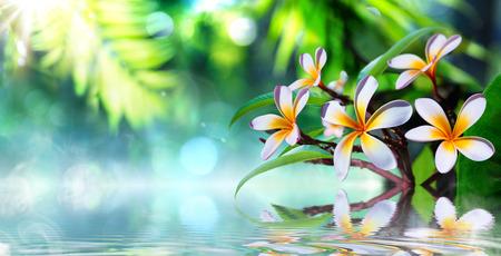 zen tuin met frangipani en damp op het water