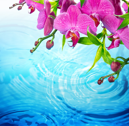 purple orchid on rippled blue water  freshness concept