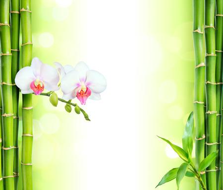 Witte orchidee met bamboe schoonheid en spa achtergrond Stockfoto - 39598003