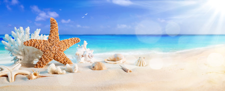 seashells on seashore in tropical beach  summer holiday background