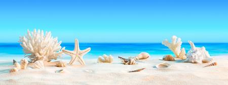 corales marinos: Paisaje con conchas marinas en la playa tropical de vacaciones de verano