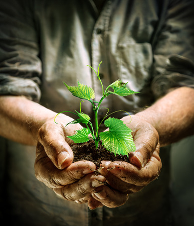 farmer hands holding a green young plant  new life concept Stock Photo