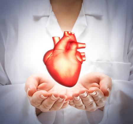 corazon humano: Doctor de la mujer que muestra el coraz�n Foto de archivo