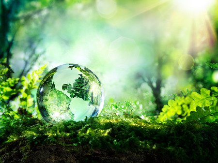 sustainable development: crystal globe on moss in a forest  environment concept