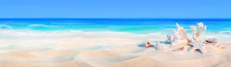 caracolas de mar: conchas marinas en la costa - Playa de fondo de vacaciones Foto de archivo