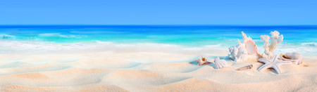 sea beach: seashells on seashore - beach holiday background