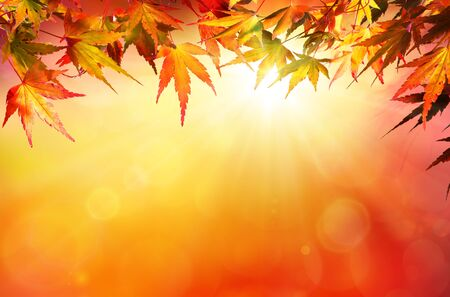 sunshine: Autumn background with red leaves and sunshine