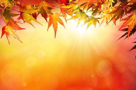 sol radiante: Fondo del otoño con las hojas rojas y el sol Foto de archivo