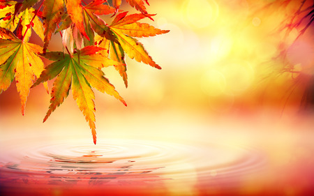 Autumn spa background with red leaves on water 写真素材