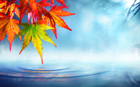 leaf water drop: zen autumn - red maple leaves on pond Stock Photo