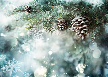 pine green: Fir Branch With Pine Cone And Snow Flakes Stock Photo
