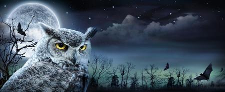 Halloween Scene With Owl And Full Moon 写真素材