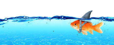 goldfish: Small Fish With Ambitions Of A Big Shark - Business Concept Stock Photo
