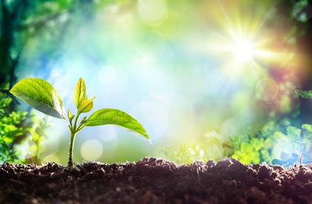 Pflanzen: Wachsende Sprout - Beginn eines neuen Lebens