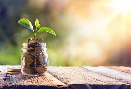 money jar: Plant Growing In Savings Coins - Investment And Interest Concept Stock Photo