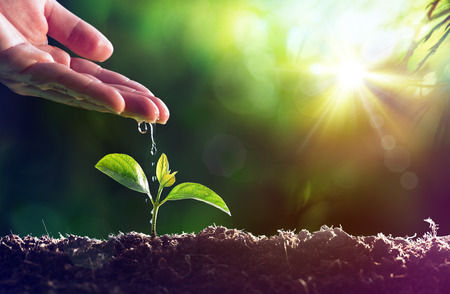 seedling growing: Care Of New Life - Watering Young Plant Stock Photo