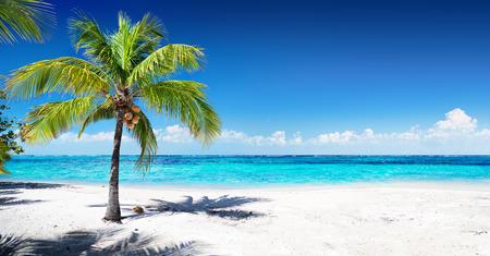 야자수와 아름다운 산호 해변 스톡 콘텐츠