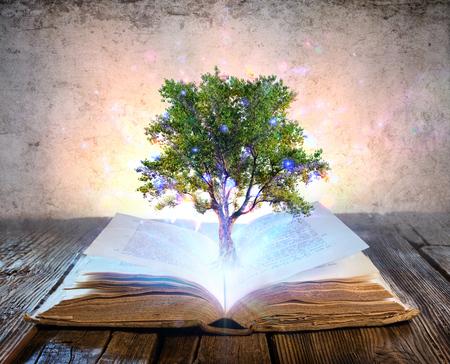 Árbol que crece en el libro antiguo - brillante y luces mágicas Foto de archivo
