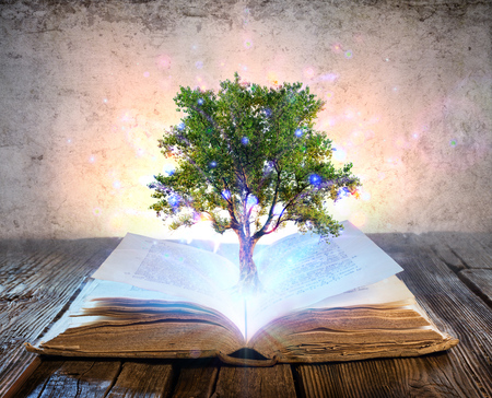 Tree Growing From The Old Book - Shining And Magic Lights Stock Photo