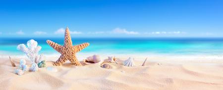 Sabbia d'oro con conchiglia e stelle marine - Seashore Tropical Archivio Fotografico - 58821648