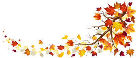 autumn leaves falling: Branch With Autumn Leaves Falling In Illustration