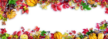 Colorful Fall Leaves On White - Autumn Decorative Border