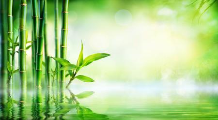 竹バック グラウンド - 水の反射と青々 とした葉