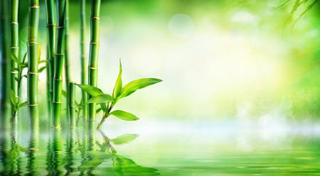 bamboo: Bamboo Background - Lush Foliage With Reflection In The Water