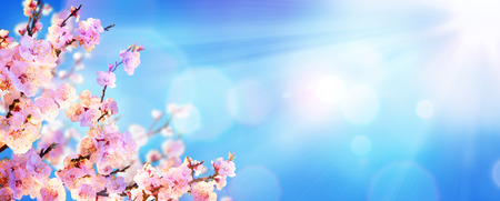pink skies: Spring Blooming - Almond Blossoms With Sunlight In The Sky