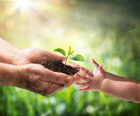 Uomo anziano che dà giovane pianta ad un bambino - Protezione Ambiente per New Generation Archivio Fotografico - 72045105