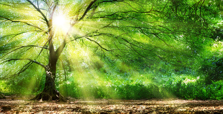 green backgrounds: Tree With Sunshine In Wild Forest Stock Photo
