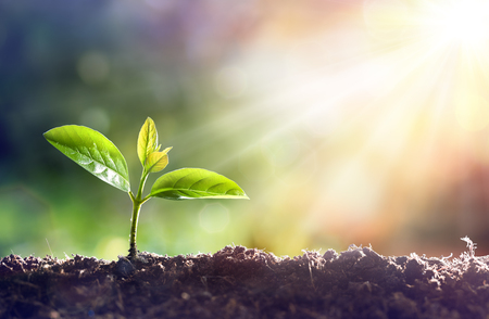 Young Plant Growing In Sunlight Archivio Fotografico