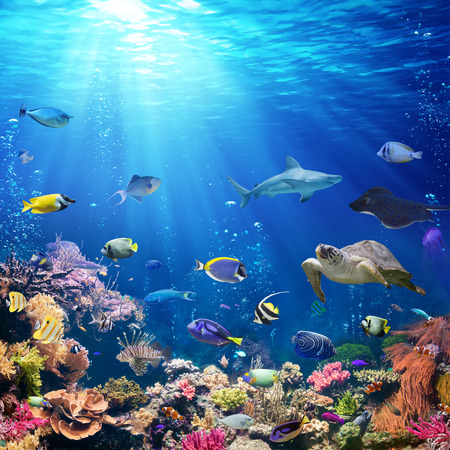 Underwater Scene With Coral Reef And Tropical Fish 스톡 콘텐츠