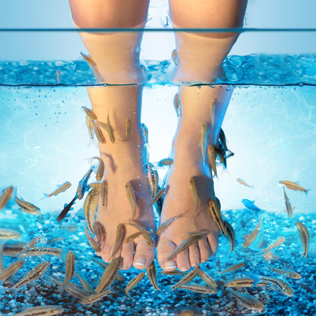 Fish Spa - Pedicure Met Rufa Garra Stockfoto - 83635738