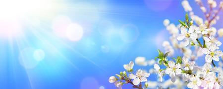 printemps floraison - lumière du soleil sur les fleurs d & # 39 ; Banque d'images