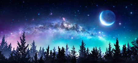 Milky Way And Moon In Night Forest Stock Photo
